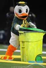 Oregon Duck