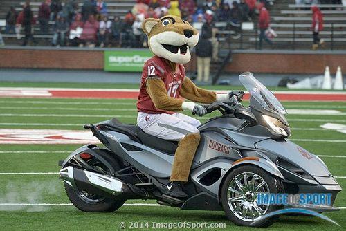 Butch T. Cougar Washington State mascot