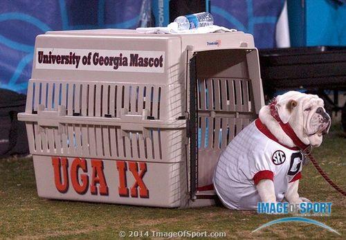 Georgia Bulldogs mascot UGA IX